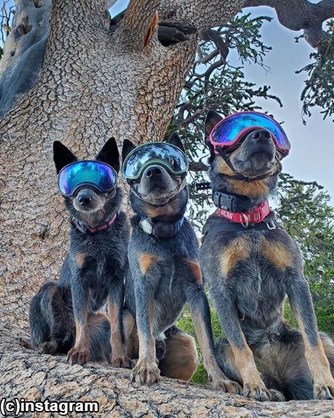 聴覚障害をもつ犬が30kmも歩けるように!一つのハイキングチームの物語