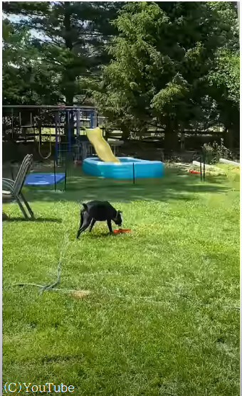 水遊びが大好きなんだワン!水を出すコツを知った犬がエンドレス水遊び