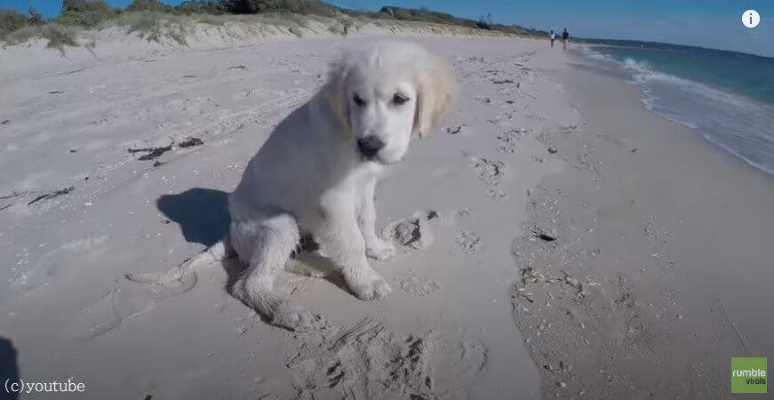 【波VS子犬】白い砂浜を青い海!ここを舞台に波と子犬によるギリギリの戦いがはじまった