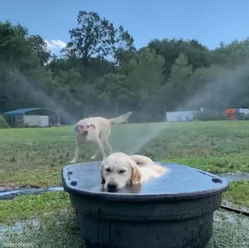 【遊び方は犬それぞれ】ラブラドールレトリバー2匹のバカンスの過ごし方