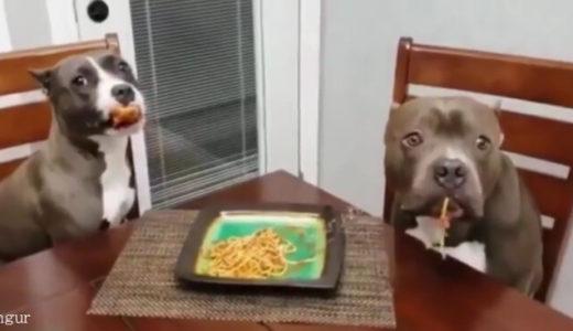 【犯人は現場にいた!】現行犯で盗み食いが見つかった二頭の犬たちの運命とは?