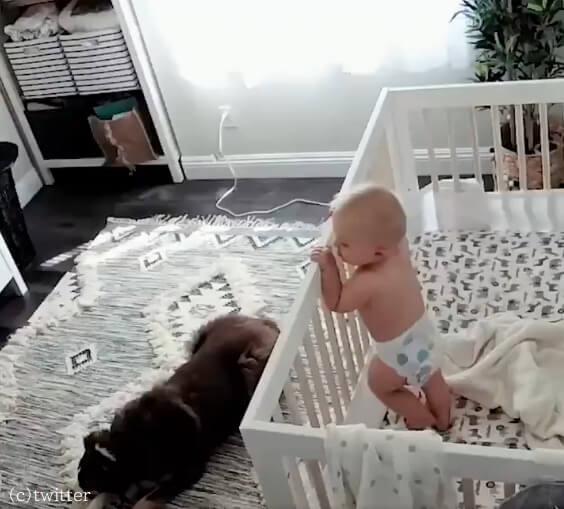 お守りは任せて!泣き出した赤ちゃんを一瞬でなだめたベビーシッター犬