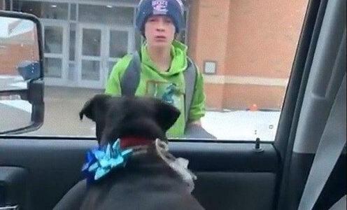 【感涙】行方不明になった犬と飼い主の少年が再会する感動動画に涙してしまう人が多数!