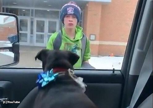 【感動動画】行方不明になった犬と再会する感動動画ストーリーに涙してしまう人が多数!