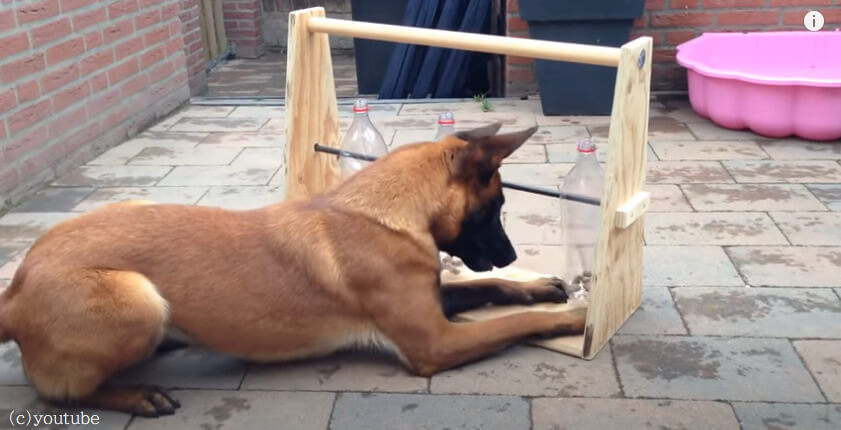 【飼い主お手製の犬専用おもちゃ】運動しながらおやつをゲットできる愛情たっぷりマシーン