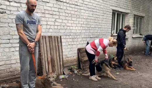 【犬には負けない!】ピューマが参加してるのは犬のトレーニングだった