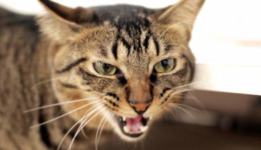 【注意喚起】ウイルス原因で飼い猫が急に噛みつきなど凶暴化する症状が表れる