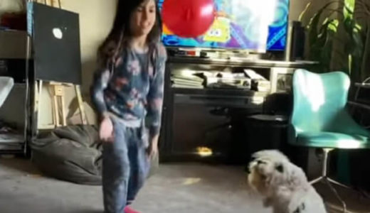 【絶対に落とさないぞ】女の子と風船をトスして遊ぶ犬が上手すぎる