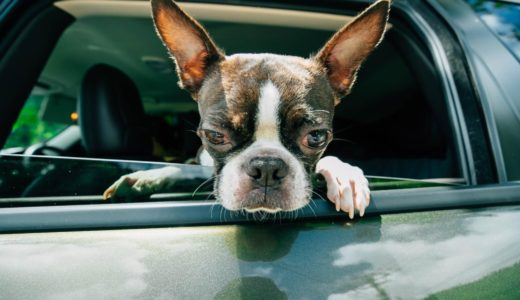 【飼い主さん必見!】ペットを安全に自動車に乗せる方法4つを紹介します
