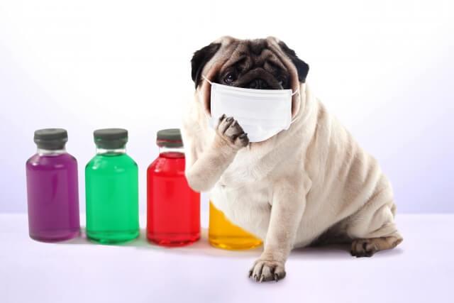 犬や猫にマスクは必要なのか?ペットを新型コロナウイルスから守るために知っておきたいこと