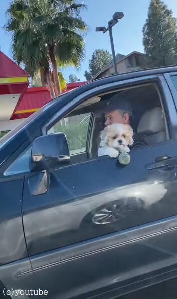 【ワンちゃんショック!】ドライブ中に大事なボールを落としてしまった犬の悲劇