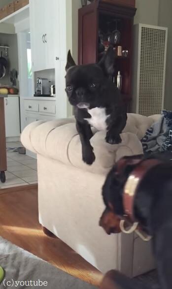 【奇跡的なタイミング】飼い主に呼ばれてカッコよくジャンプした犬!だけどまさかの展開に