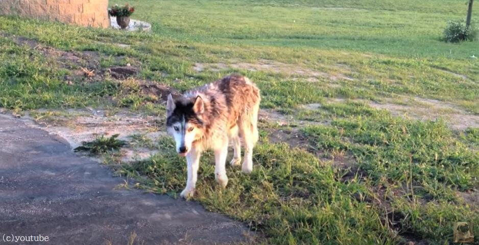 【足が不自由だった老犬が歩けるように!】自力で歩けるようになるまでの軌跡