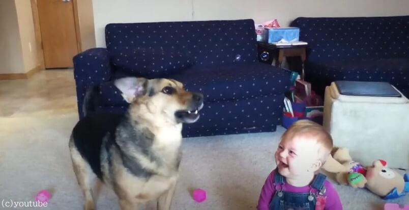 【追いかけてパクッ】シャボン玉に夢中な犬とそれを見て笑いが止まらない赤ちゃんのほっこり動画