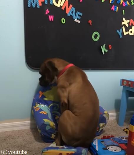 【座りたいのに座れない犬!】理由が分からず困惑するワンちゃんの表情がアカデミー級