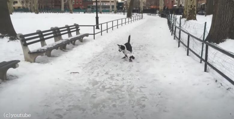 【飼い主にバチが当たった!】雪道ですべって転んだ愛犬を笑った飼い主もすってんころりん