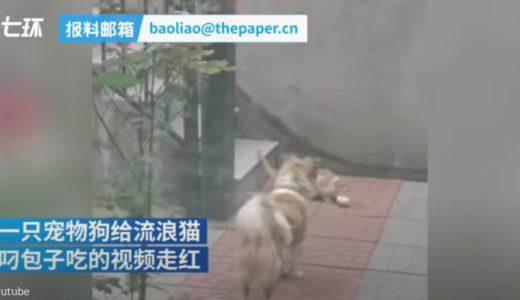 【おなかペコペコな野良ネコ発見!】犬が驚きの行動に出た映像に思わずほっこり