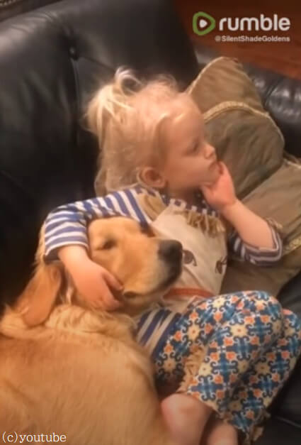 【ボディーガードは寝ながらでも大丈夫!】小さなレディを守るゴールデンレトリバーの仕事ぶり