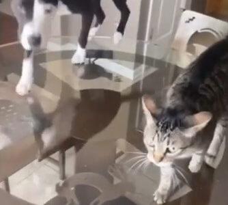【猫みたいな犬?】自分を猫だと信じて疑わない犬の行動がまさに猫そのもの