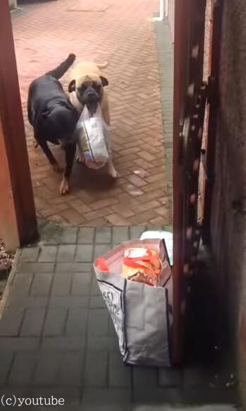 【荷物運びは得意だよ】犬は買い物から帰ってきた飼い主さんをお手伝い