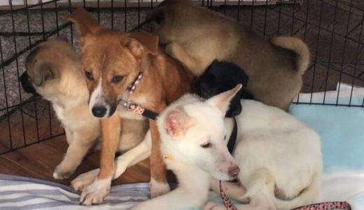 静岡で保護犬達のドッグラン建設計画のための応援を「NPO法人その小さないのち守りたいプロジェクト」が募集中