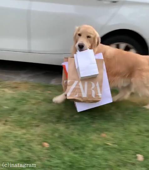【荷物運びが大好きな犬!】買い物から帰ってきたご主人を待っていたのは可愛らしいメイドさん