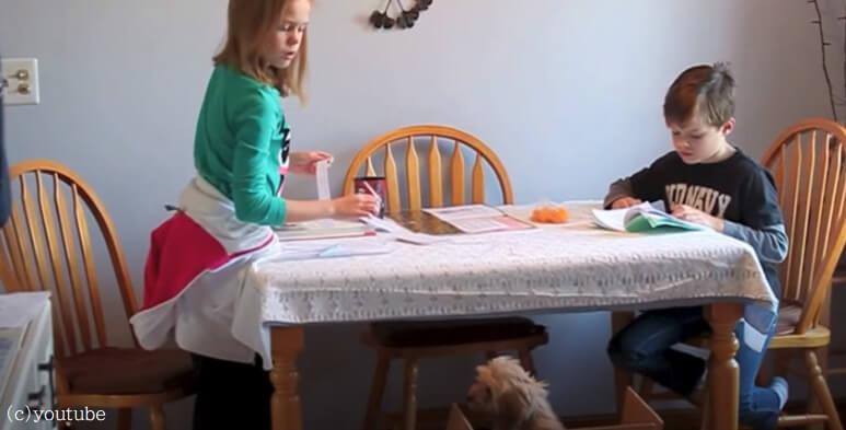 【姉弟2人にサプライズ】小さな子犬が家族になった日!二人の反応をこっそり撮影