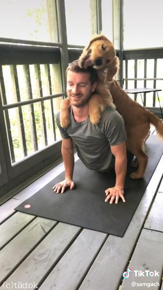 ストレッチ中の飼い主にゴールデンレトリバーが「ねえねえ遊ぼ!」と鼻先でツンツンして飛び乗り、構って攻撃を繰り出す