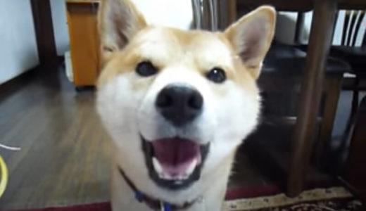 【絶対にイヤだったらイヤ!】犬らしかぬ声を出してお風呂を断固拒否する柴犬