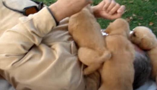 【大の大人が犬に襲われる!】生まれて間もない子犬たちの攻撃にタジタジの飼い主