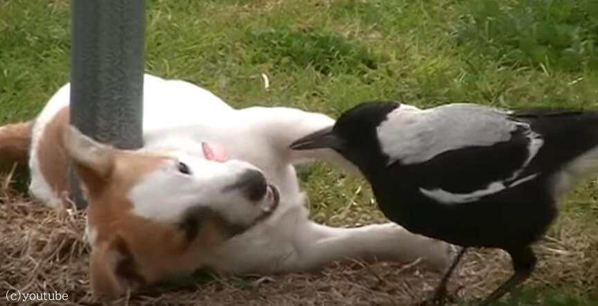 【元気いっぱいな子犬の友達は鳥】芝生の上で戯れる子犬と鳥の様子がおとぎ話みたい