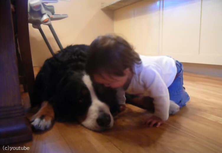 小さな赤ちゃんと大きな犬のほんわか動画【二人はかけがえのない家族】