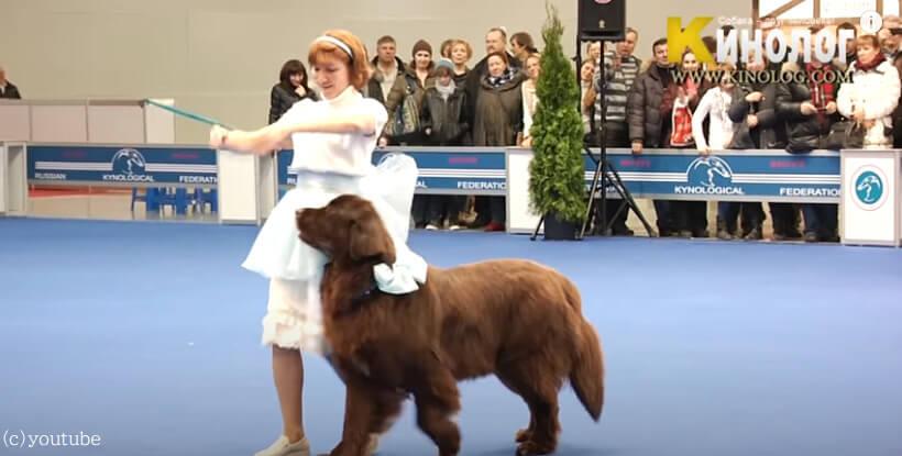 【Shall we ダンス?】飼い主さんと華麗な踊りを披露するフサフサの大型犬