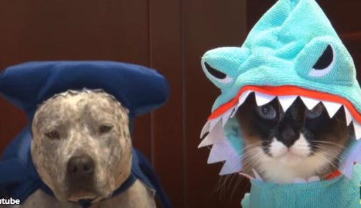 【シュール!】コスプレをする犬と猫、それを見たアヒルの反応
