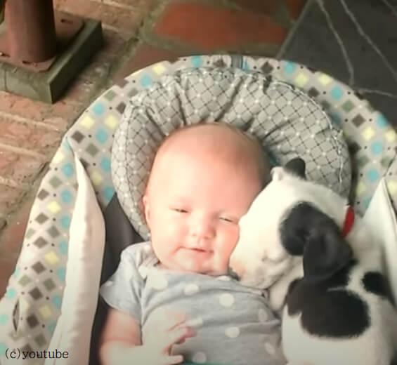 【そこはまるで楽園】人間の赤ちゃんと犬の赤ちゃんのコラボが最強だった