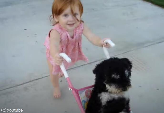 【おままごとに付き合うワンコ】小さなママが小さな犬をお散歩させてるほのぼの動画