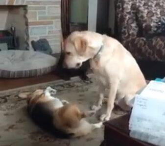 小さな子犬と子猫が超キュート!二匹を穏やかに見守る大型犬も幸せそう