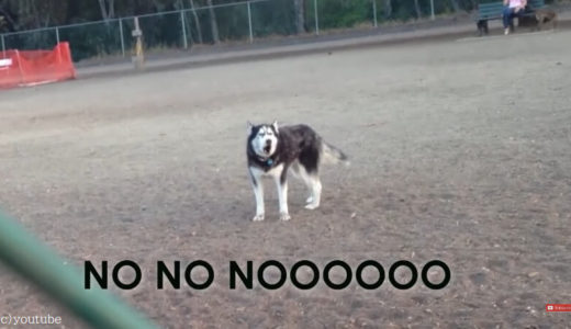 【まだ帰りたくない!】ご主人の帰るよの一言を聞いて駄々をこねる犬