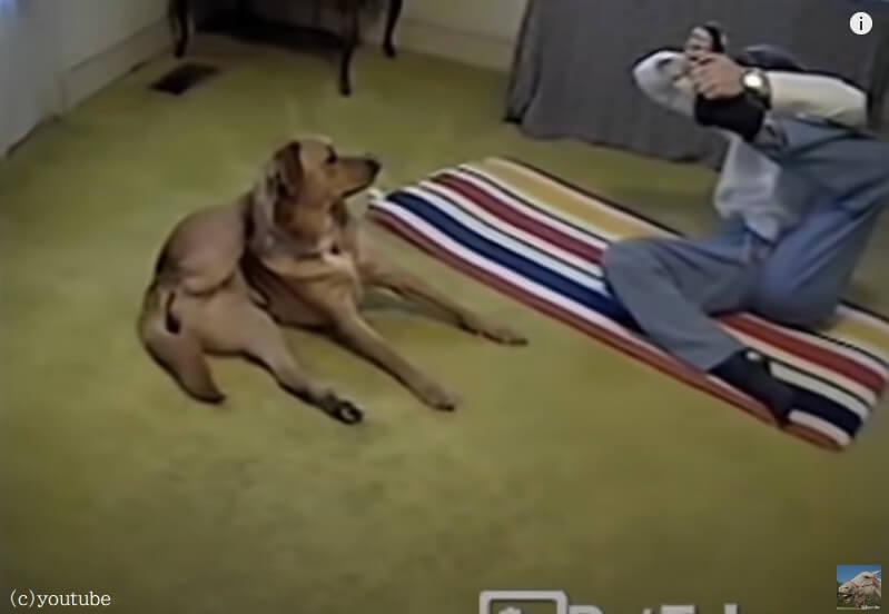 【まるでインストラクター】飼い主よりヨガポーズが上手な犬!ポテンシャルの高さに驚き