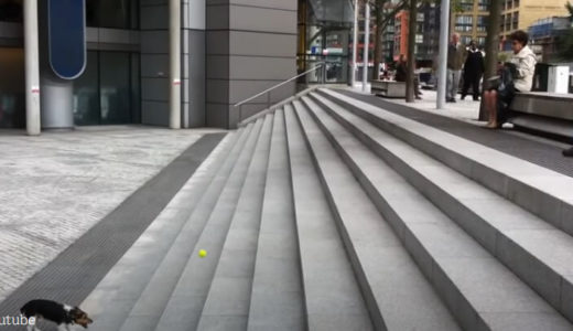 階段を使って一人遊びに夢中の犬がスゴイ!あまりの賢さに周囲の人たちも目が釘付けになる
