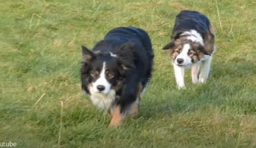 【抜き足差し足忍び足】列をなして「スパイごっこ」を楽しむ犬たち