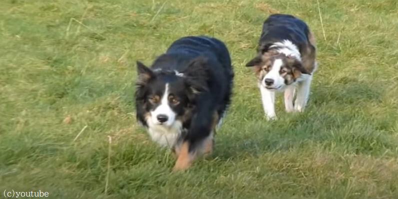 【抜き足差し足忍び足】列をなしてスパイごっこを楽しむ犬たち